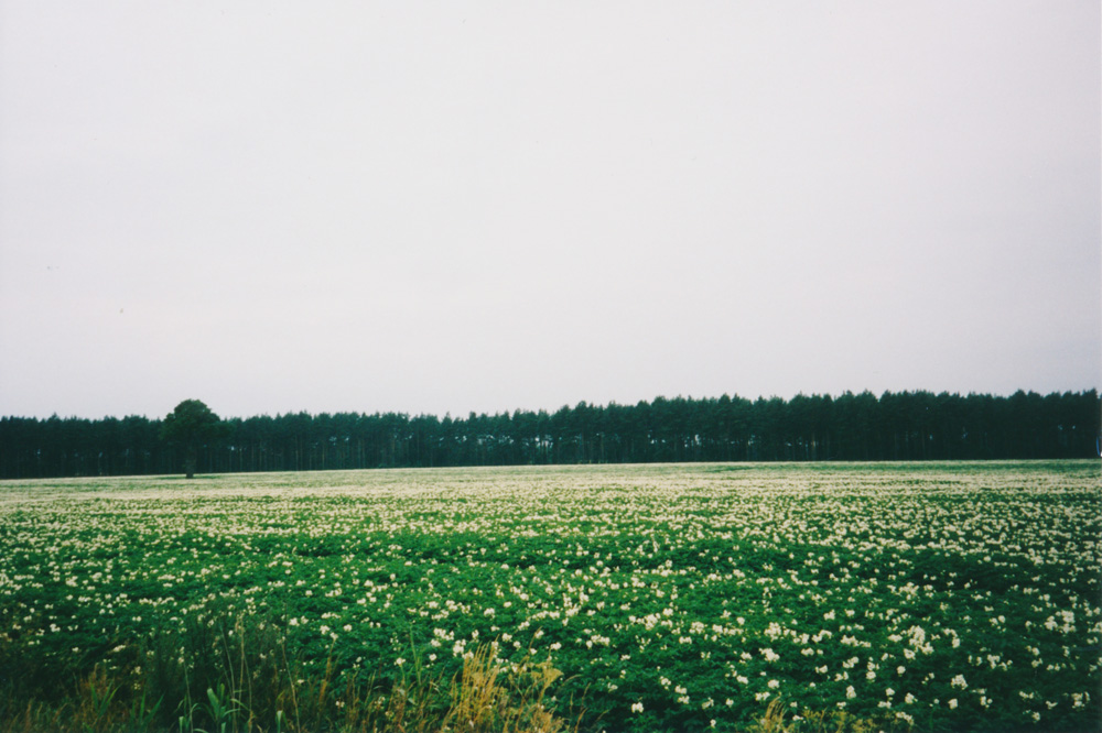 Fields after fields with potatos surrounded me outside Kalmar.